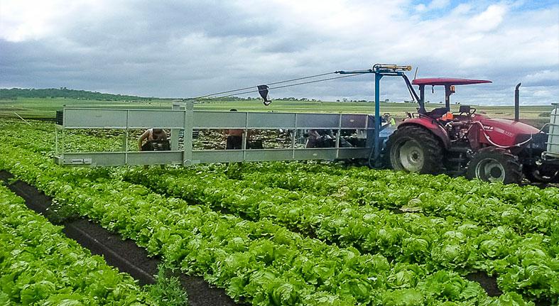 RD invertirá RD$345 millones en proyectos agrícolas