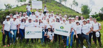 En jornadas reforestación voluntarios Banco Caribe plantan 7 mil árboles