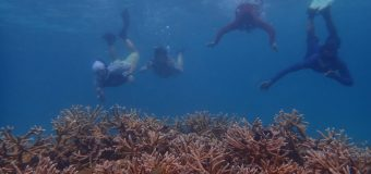 Restauración corales Fundación Grupo Puntacana seleccionado para Fondo Biodiversidad Caribe