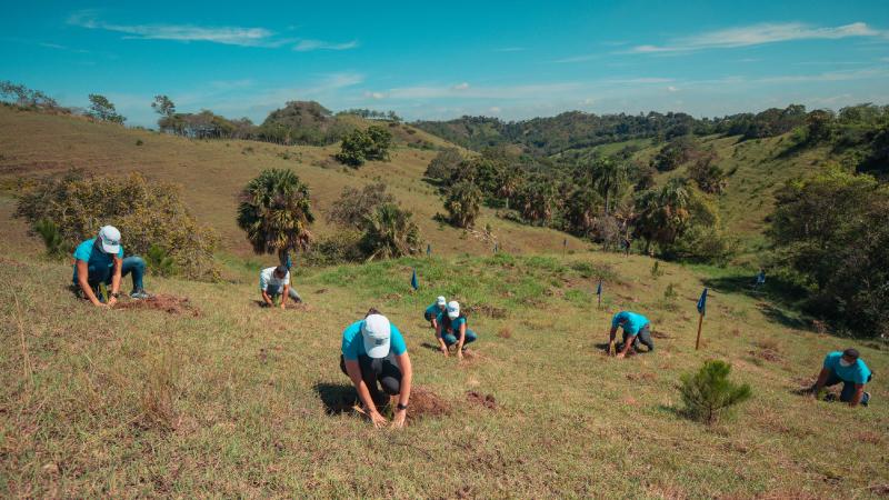 El Popular y aliados siembran más 320,000 árboles durante 2020